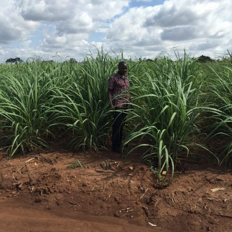 Atiak Sugar project, Amuro District, Uganda, Nov 2016