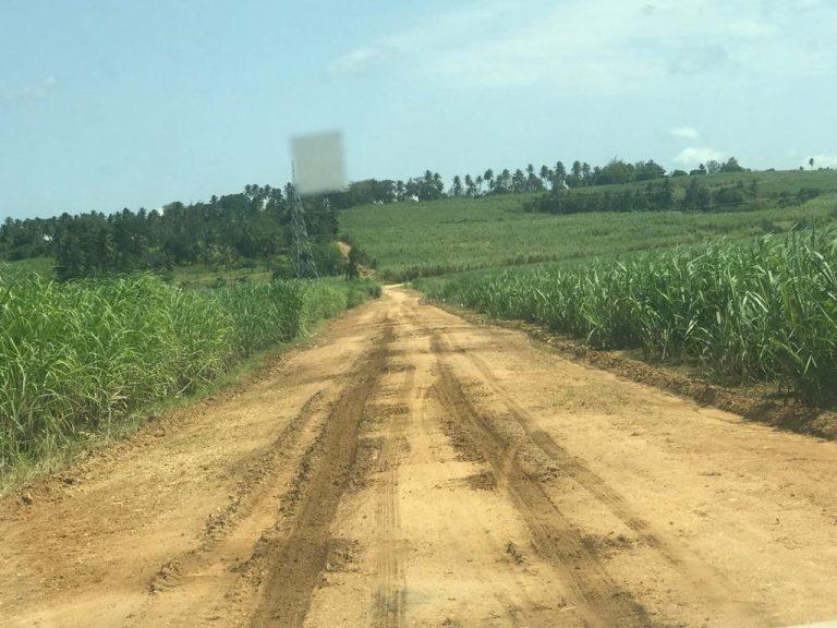 Sugar plantation, south of Diani, Kenya, Jun 2019